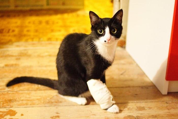 kucing hitam dengan kaki yang diperban