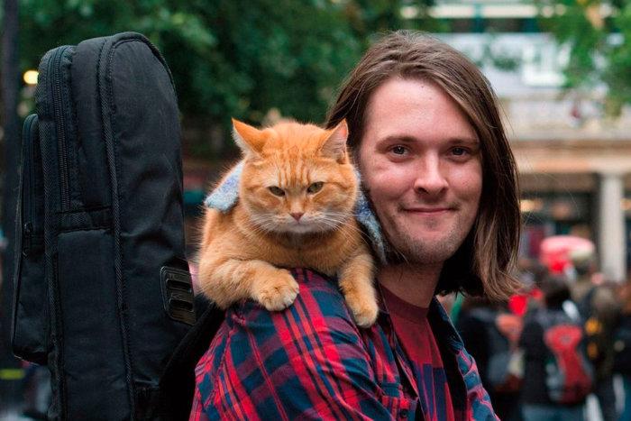 Kucing jalanan bernama Bob
