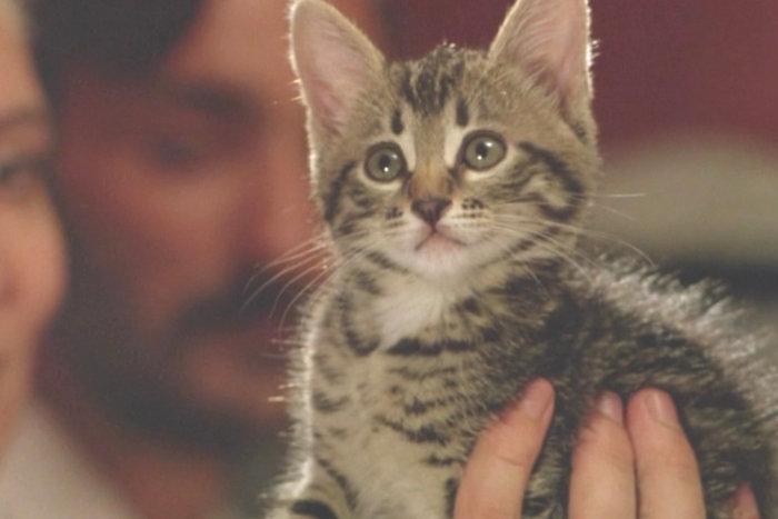 """Film """"Anak Kucing"""""""