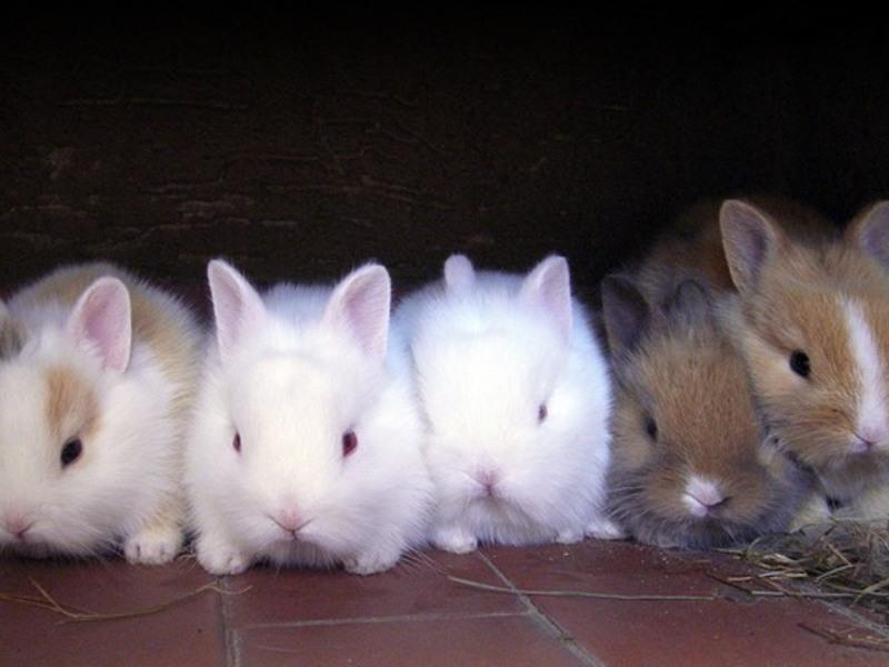 de ce iepurii pierd brusc în greutate)