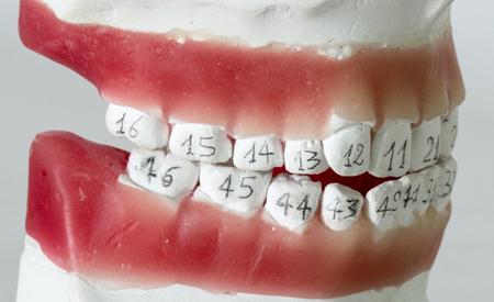 Нумерация зубов в стоматологии: схема расположения ...