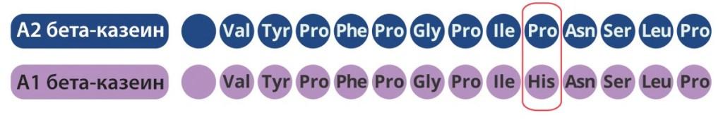 разница между бета-казеинами А1 и А2 — это аминокислота в 67-м положении