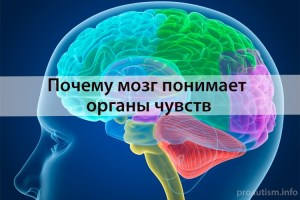 Мозг и сенсорные системы