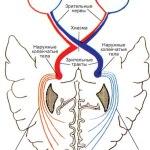 zritelnyj-nerv1