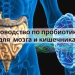 Руководство по пробиотикам для вашего мозга, настроения и кишечника