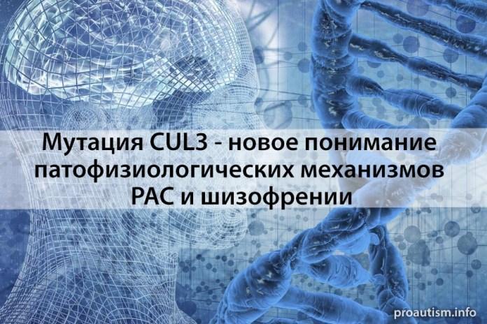 Мутация CUL3 - новое понимание патофизиологических механизмов РАС и шизофрении