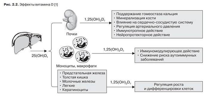 Эффекты витамина Д