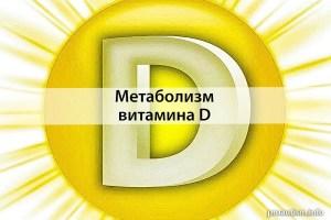 Метаболизм витамина Д в организме человека