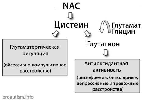 N-ацетилцистеин и его постулируемые метаболические функции