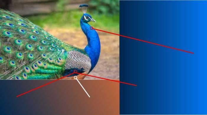 Pea-Cock-Color-Design