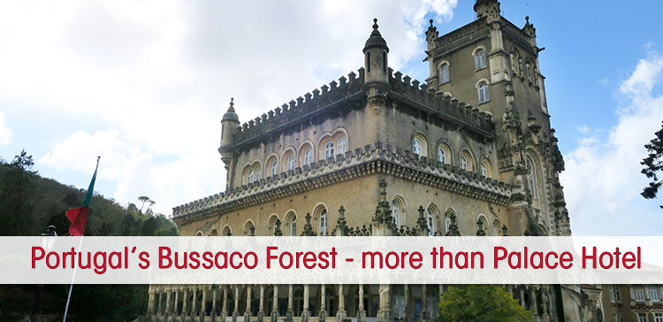 Portugal's Bussaco Forest is most famous for the Buçaco Palace Hotel, but there is a lot more to see at the Buçaco Forest in Portugal. Discover the eery forest with the ancient arboretum, 600 year old trees, fern valley and the magical fountain.
