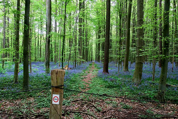 The Bluebell Forest near Halle Belgium is a true spectacle of nature. The Hallerbos Belgium showcases the most delicate wild bluebells in the forest. What I though would be a quiet morning in nature, turned into a fight about sustainable travel. Read more to find out what happened.
