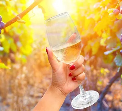 How to find the best Champagne tour from Reims France