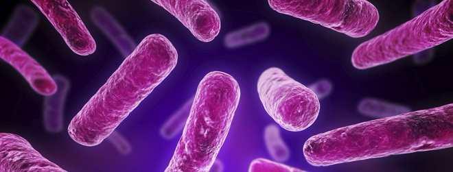 probiotics breaktrough