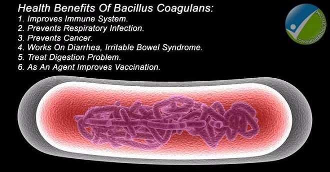 Probiotic Bacteria Benefits