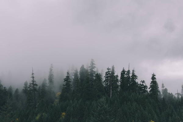 How to Build Your Blog's Audience with Long Form Evergreen Content