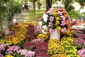 Festivalul florilor de toamna