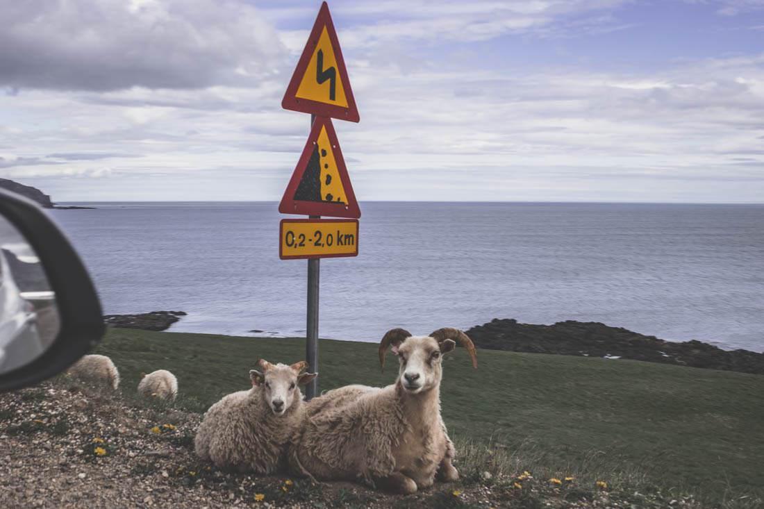 Road trip à la rencontre des macareux en Islande - Jour 6