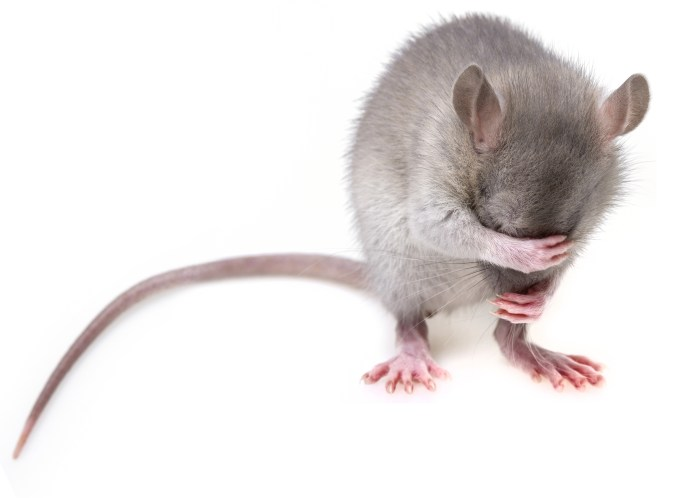 stressedmouse