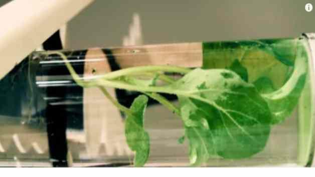 nanoparticulas en plantas