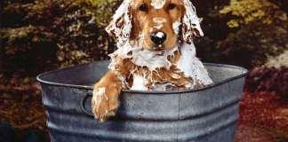 Higiene animales
