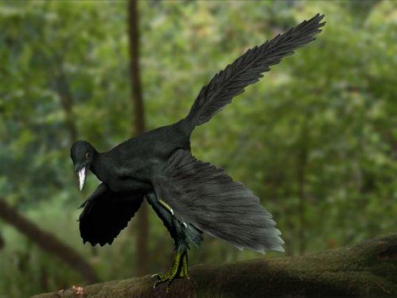 Archaeopteryx recreacion