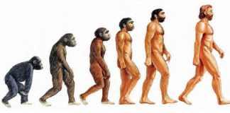 evolucion al mono