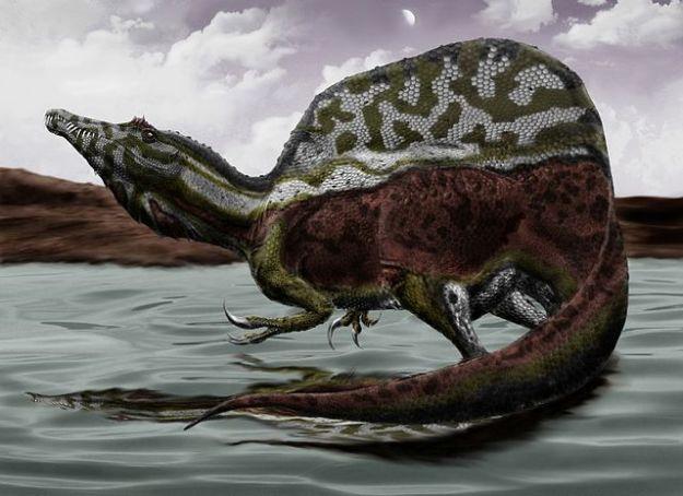 spinosaurus mata a t rex