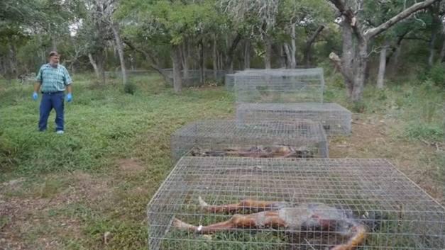 granja cadáveres