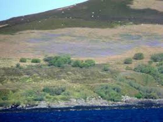 isla ántrax