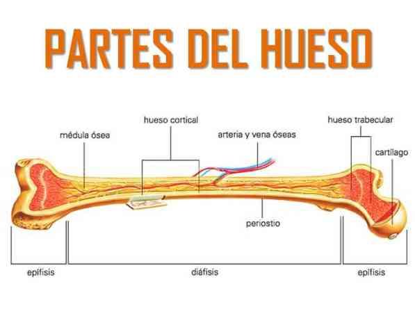 clasificación fracturas de cadera