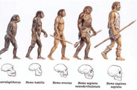 cambios evolutivos