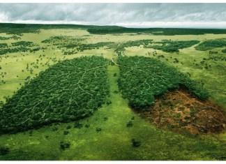 Amazonas, pumón del mundo
