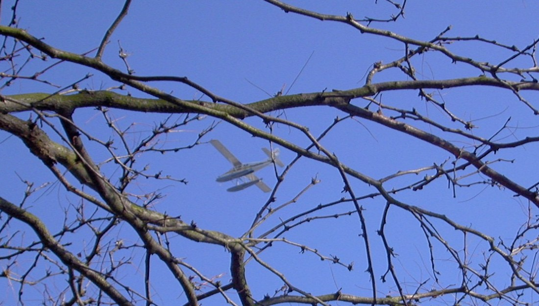 Flying Through Bare Branches
