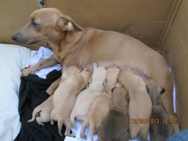 Adoção 04 - Cãezinhos