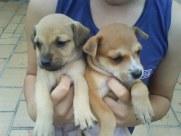 Beenjamin e seus Cachorrinhos.