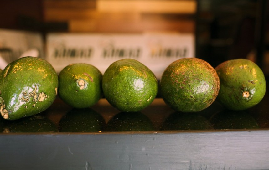 Florida avocados sit near the window that grow on a tree next to Ahmad Hussam Saadaldin's campaign office in Temple Terrace, Florida  on Wednesday, November 1, 2017. Saadaldin is running as an independent in the special election for the Florida House of Representatives District 58 on December 19.