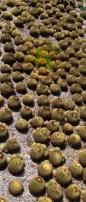 round cactus garden