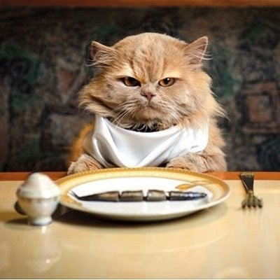 Gato alimentación saludable
