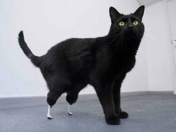 Gato Óscar - curiosidades