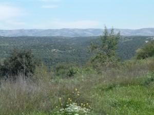 hills where david hid