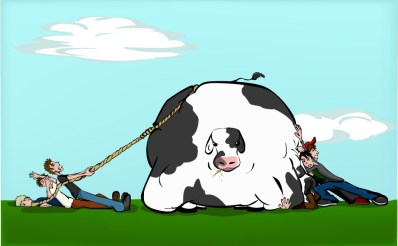 Cow_Tipping_by_walking_distraction
