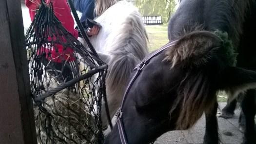 Besties share their hay.