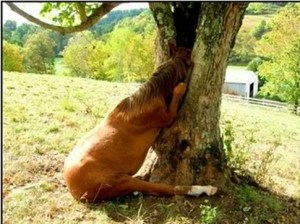 funny_horse_picture_21