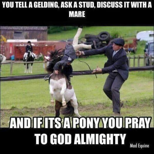 tell a gelding