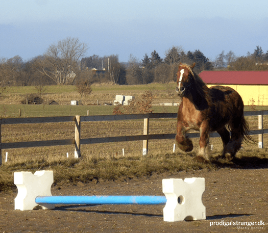 Or someone taking on the dreaded challenge of the single cavaletti. Those things are dangerous in the wild!