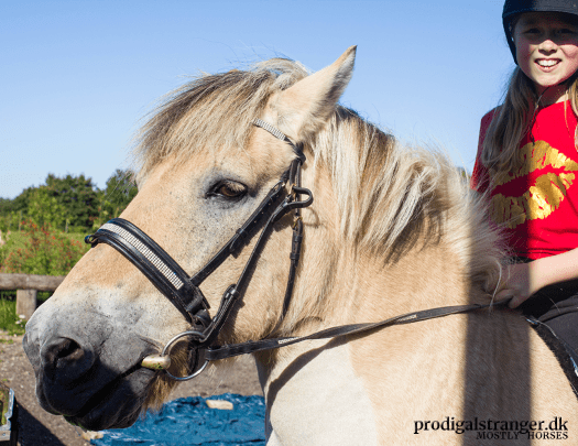 Loke, named for the Norse trickster god, lives up to his name. Clever and mischievous as, well, a fjord horse, he'll do almost anything for his human playmate—as long as she asks nicely.