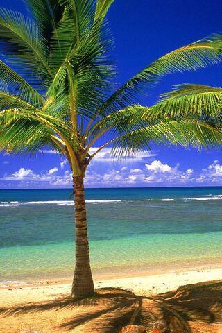 palmier de plage fond d ecran