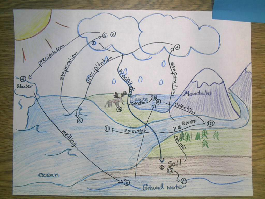 Prodigy Science Ecosystems Cycles In Nature