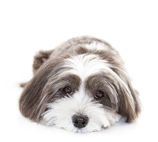 Pro Dog Hydrobaths cute soft dog